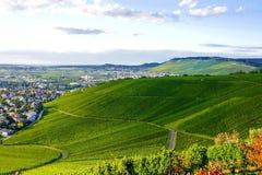 Weinstadt do panorama dos vinhedos Imagem de Stock Royalty Free