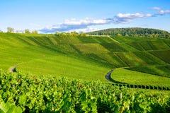 Weinstadt do panorama dos vinhedos Fotos de Stock