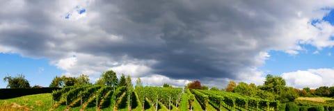 Weinstadt do panorama dos vinhedos Fotos de Stock Royalty Free