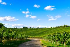 Weinstadt do panorama dos vinhedos Imagem de Stock