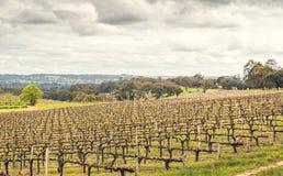 Weintal in Adelaide Hills Lizenzfreie Stockbilder