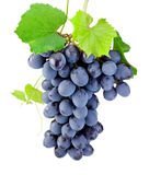 Weintraube lokalisiert auf einem weißen Hintergrund Stockfoto