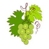 Weintraube mit dem Blatt lokalisiert auf weißem Hintergrund lizenzfreie abbildung
