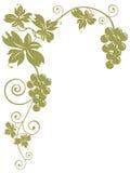 Weintrauben und Blätter Stockfoto