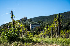 Weinyardüberblick Italien Toskana stockbilder
