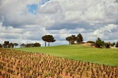 Weinyard Lizenzfreie Stockfotos