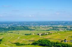 Weinyard in Burgunder, Frankreich, Sommer Lizenzfreie Stockbilder