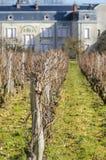 Weinyard, Burgunders, Frankreich, die Saone-undloire Lizenzfreies Stockbild