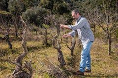 Weinzüchter arbeitet an der Beschneidung in einem alten Weinberg lizenzfreie stockfotos