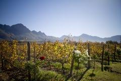 Weinzustandlandschaft mit Bergen Lizenzfreie Stockfotos