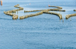 Weir histórico dos arenques Foto de Stock