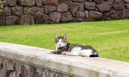 Weird Breed Cat Stock Photos