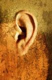 Weird Ear. Illustrative image manipulation of an ear Stock Photo