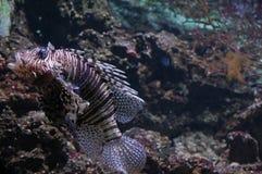 A weird fish Stock Images
