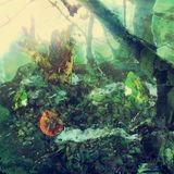 Weird Garden in colour. A photomanipulation in Photoshop, using pictures of objects from around the house Royalty Free Stock Photos