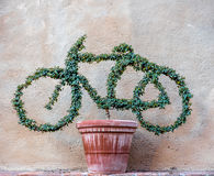 Weird plant shaped as a bike Stock Images
