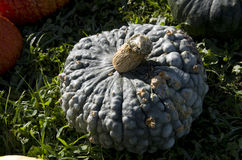 Weird pumpkin Royalty Free Stock Photos