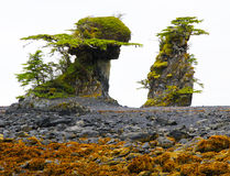 Weird tidal formations. Unusual tidal formations near Sitka, Alaska - erosion above high tide Royalty Free Stock Photo