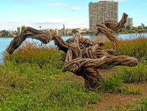 A weird tree in Oakland, California royalty free stock image
