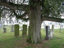Weird Tree and Old Graves. These are some very interesting old tombstones with a creepy looking tree in the background royalty free stock image