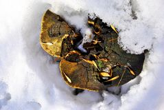 Weird tree sawn stump with acer seeds on snowy meadow. Top view royalty free stock photo