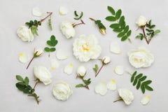 Weißrosenblumen und Grünblätter auf hellgrauem Hintergrund von oben, schönes Blumenmuster, Weinlesefarbe, flache Lage Stockbilder