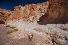 Weise in der Wüste im Israil am sonnigen Tag mit roten Bergen, Grünpflanzen und blauem Himmel Lizenzfreie Stockfotografie