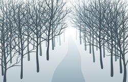 Weise durch nebelhaften Wald Stockfotos