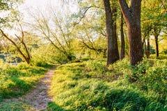 Weise durch Park-Späthölzer nahe Fluss oder See bei Frühlings-Sonnenuntergang Lizenzfreie Stockfotografie