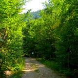 Weise im grünen Waldweg zu Poiana Brasov Lizenzfreie Stockbilder