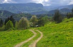 Weise im sonnenbeschienen alpinen Tal am Frühlingstag, Slowenien Stockfoto