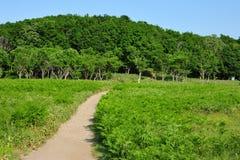 Weise im Wald Stockbild