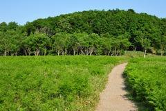 Weise im Wald Lizenzfreies Stockfoto