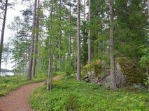 Weise im Wald Stockfotografie