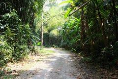 Weise im Wald am Nationalpark Lizenzfreie Stockbilder