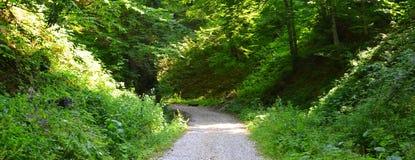 Weise und grüne Landschaft im Waldweg zu Poiana Brasov Stockbilder