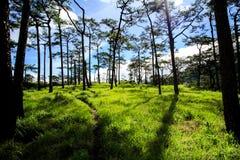 Weise zurück in Wald Stockbild