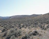 Weiser Pinsel in einem Tal der hohen Wüstenlandschaft lizenzfreies stockfoto