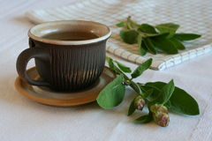 Weiser Tee Lizenzfreie Stockfotografie