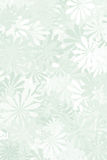 Weises Grün-Blumenhintergrund Stockfotos
