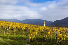Weissenkirchen. Wachau valley. Lower Austria. Autumn colored leaves and vineyards. Church of Weissenkirchen. Wachau valley. Lower Austria. Autumn colored leaves stock images