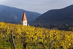 Weissenkirchen. Wachau valley. Lower Austria. Autumn colored leaves and vineyards. Church of Weissenkirchen. Wachau valley. Lower Austria. Autumn colored leaves royalty free stock photography