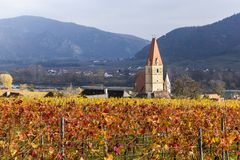 Weissenkirchen. Wachau valley. Lower Austria. Autumn colored leaves and vineyards. Church of Weissenkirchen. Wachau valley. Lower Austria. Autumn colored leaves royalty free stock photos