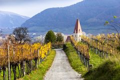 Weissenkirchen. Wachau valley. Lower Austria. Autumn colored leaves and vineyards. Weissenkirchen. Wachau valley. Lower Austria. Autumn colored leaves and stock images