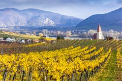 Weissenkirchen. Wachau valley. Lower Austria. Autumn colored leaves and vineyards. Weissenkirchen. Wachau valley. Lower Austria. Autumn colored leaves and royalty free stock images