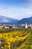 Weissenkirchen. Wachau valley. Lower Austria. Autumn colored leaves and vineyards. Weissenkirchen. Wachau valley. Lower Austria. Autumn colored leaves and royalty free stock photography
