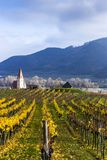 Weissenkirchen. Wachau valley. Lower Austria. Autumn colored leaves and vineyards. Weissenkirchen. Wachau valley. Lower Austria. Autumn colored leaves and stock photos