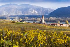 Weissenkirchen. Wachau valley. Lower Austria. Autumn colored leaves and vineyards. Weissenkirchen. Wachau valley. Lower Austria. Autumn colored leaves and royalty free stock image