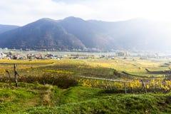 Weissenkirchen. Wachau valley. Lower Austria. Autumn colored leaves and vineyards. Weissenkirchen. Wachau valley. Lower Austria. Autumn colored leaves and stock image