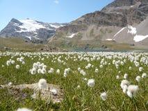Weite Gletscherlandschaft vom Grasland Stockfotografie